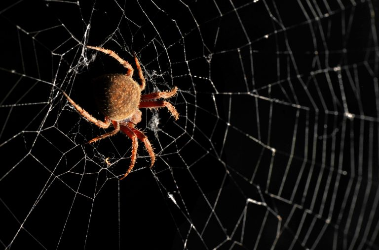 Nella tela del ragno (parte 3)